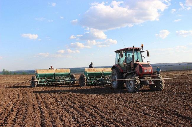 В Краснодарском крае в 2020 году посевная площадь яровых культур достигла 2 млн гектаров