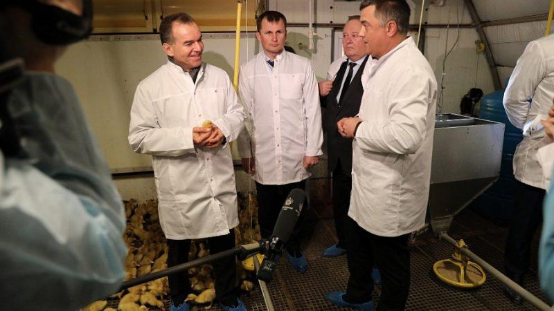 В 2019 году Краснодарский край экспортировал мясо птицы на сумму 12,3 млн долларов