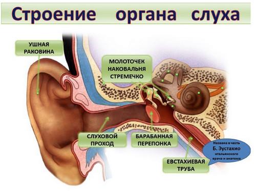 Причины ухудшения слуха и их профилактика!