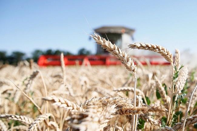 В Краснодарском крае на уборке зерновых культур ежедневно работают больше 360 комбайнов