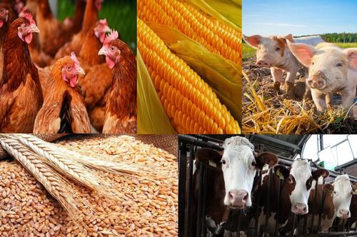 Алексей Ткачев: Закон нацелен поддержать приоритетное направление кубанского АПК – животноводство