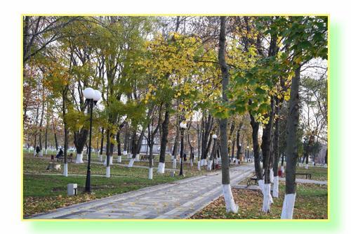 Хуторяне высадили липы возле памятника воинам Великой Отечественной войны