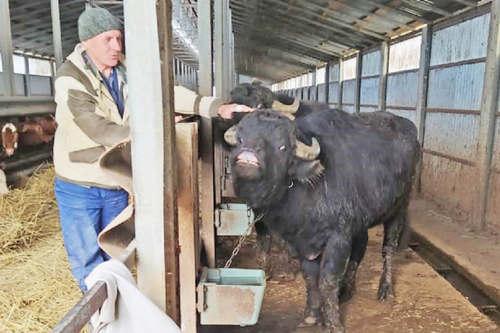 От фермы к прилавку: Кубань – кормилица!