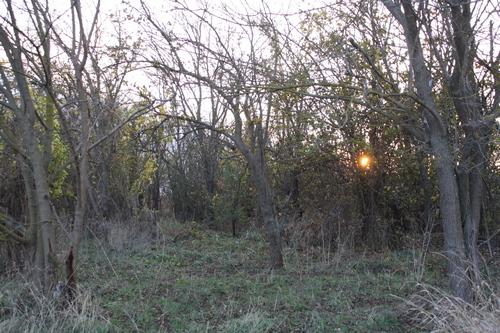 Клещи: В наши леса, рощи, потянулись отдыхающие