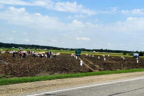 Первый урожай картофеля собрали
