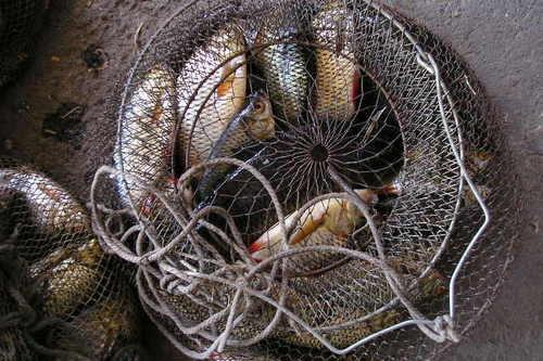 11 июля – День рыбака
