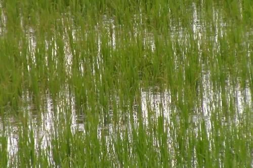 В рисовых чеках — все нормально